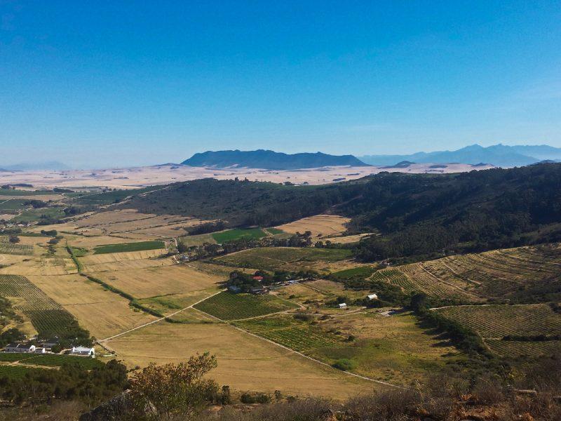 janneke-dijkhuis-volunteering-wine-farm-south-africa