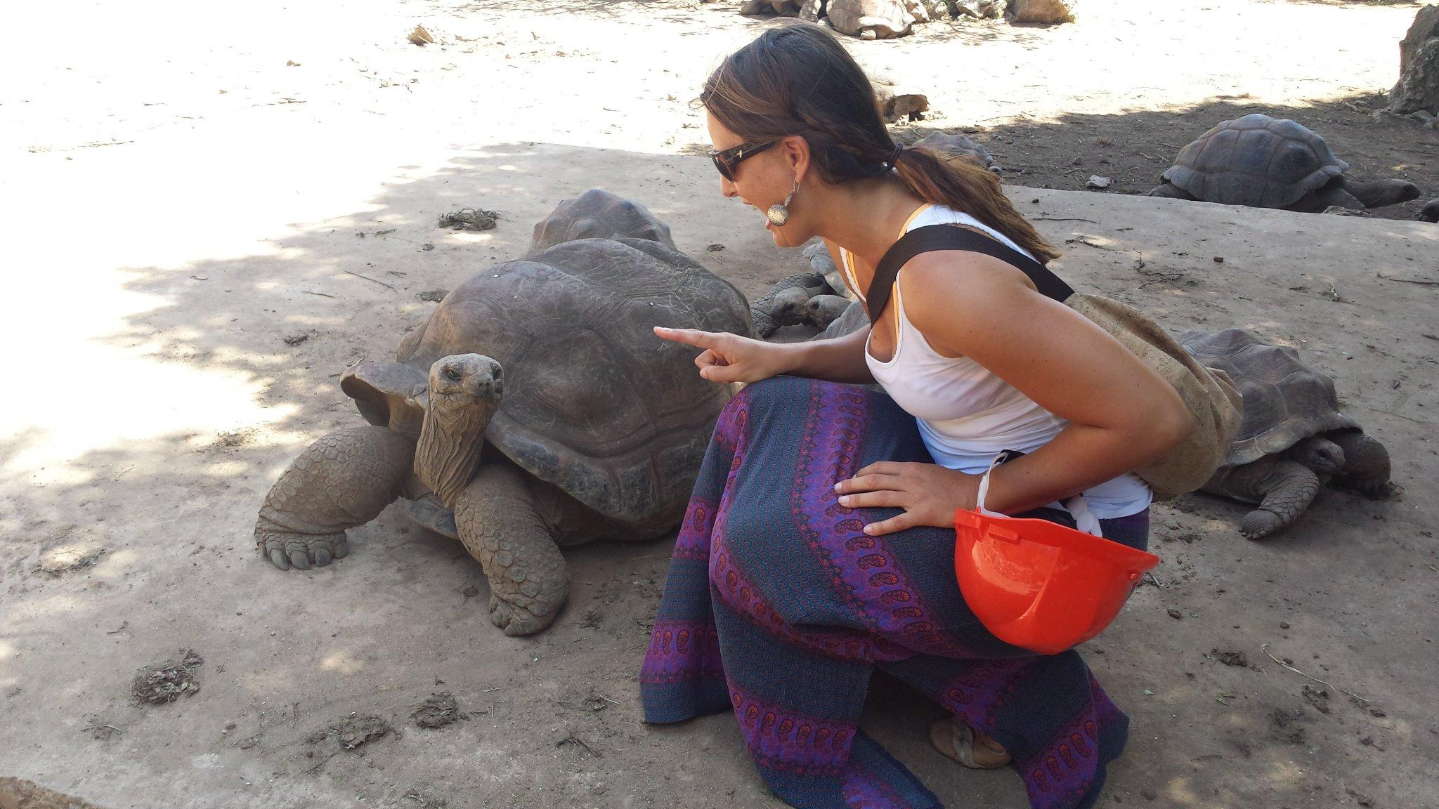 Remote-Island-Indian-Ocean-Rodrigues-tortoises